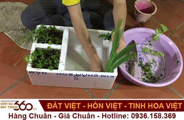 cach-cham-soc-cay-thuy-sinh