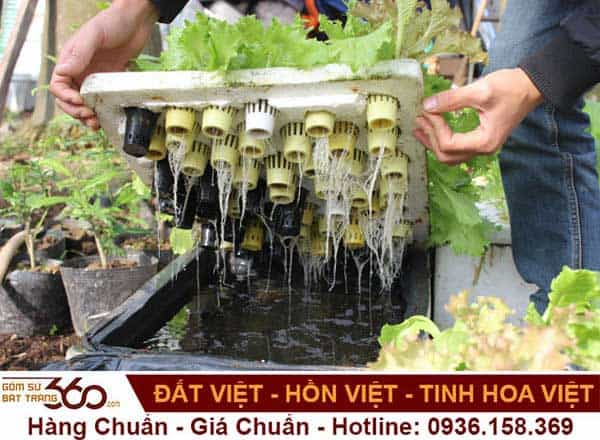 cach-trong-cay-thuy-sinh-trong-thung-xop