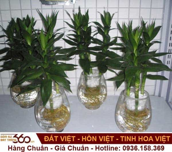 cay-phat-tai-trong-nuoc